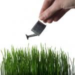 grow_green_grass_by_Mabhongo